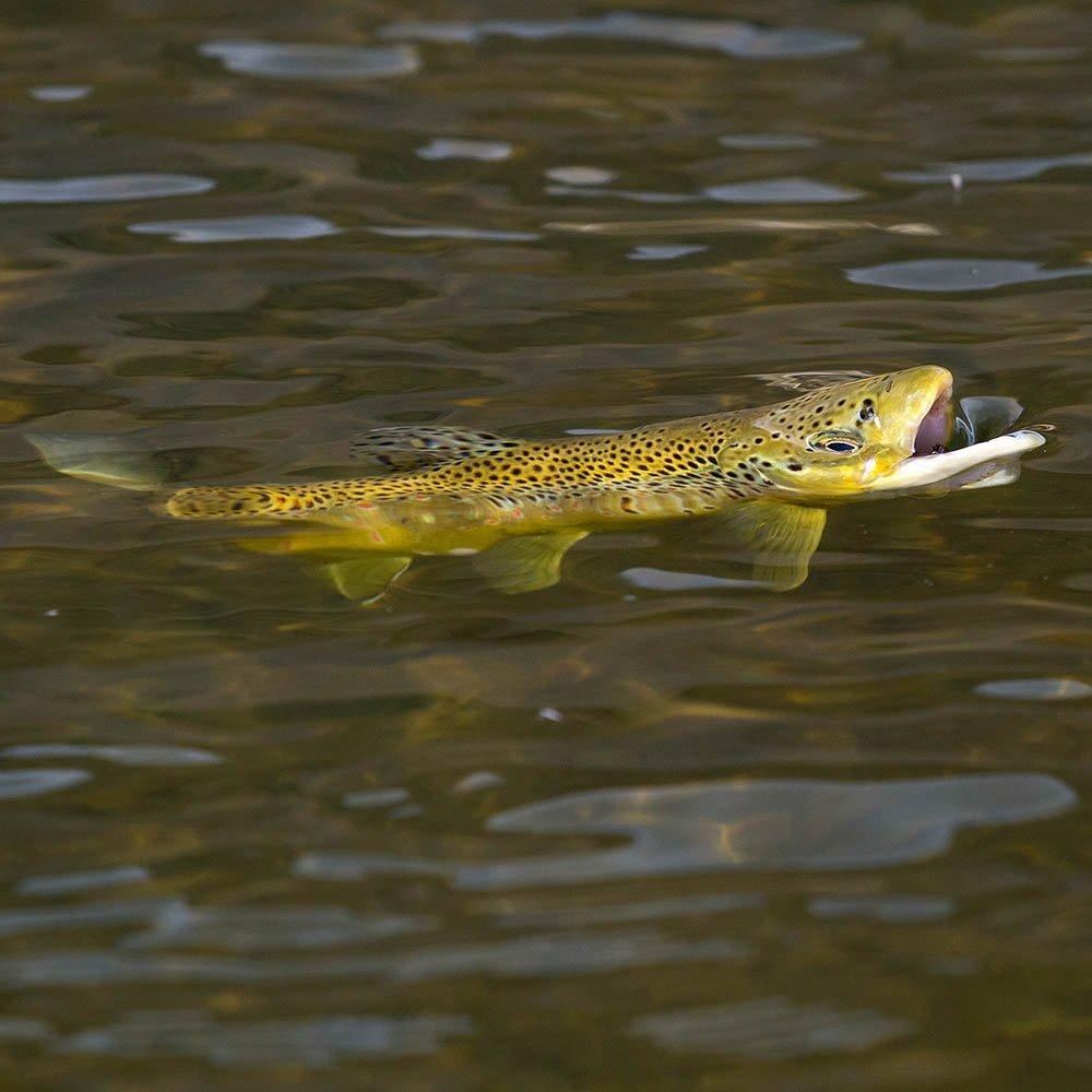Utah Provo River Spring Fly Fishing